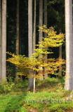 Im Wald (6770)