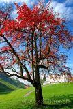 Baum im Herbst (60196)