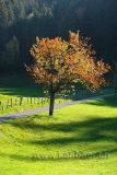 Baum Tree (60704)
