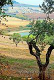 Olivenbaum (0762)