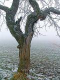 Baum / Tree (04360)