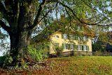 Baum mit Haus (60816)