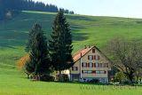 Schurtannnen (61014)