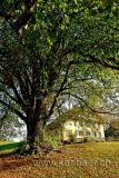 Baum / Tree (60815)