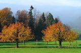 Baeume im Herbst (61386)