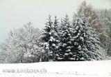 Wald im Winter (04644)