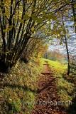 Weg im Herbst (61275)