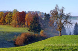 Herbst / Fall (9238)