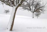 Baeume im Schnee (01477)