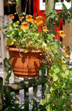 Blumen im Topf (4091)
