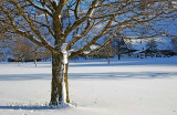 Baum / Tree (2659)