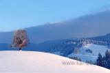 Linde im Winter (72399)