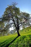 Baum (60264)