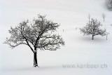 Baeume im Schnee (72334)