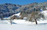 Winter (0686)
