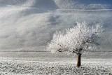 Baum mit Rauhreif (62006)