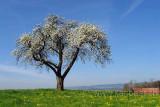 Baum (73634)