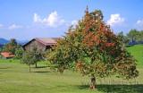 Herbst (3875)