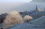 Frostiger Morgen (6392)