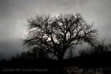 Ian Grey Photography PORTFOLIO