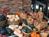 Milwaukee Harvest.jpg