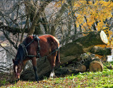 Horse enjoying Autumn