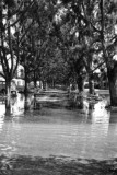 1947 - Miami Springs residential street after the Flood of 1947 caused by Hurricane VI