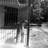 1963 - Minnie at the Crandon Park Zoo