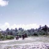 1970 - elephants at the Crandon Park Zoo