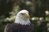 Lowry Park Birds