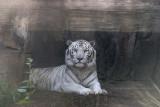 Lowry Park Animals