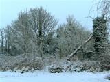 Winter wonderland.1