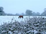 The horse next door