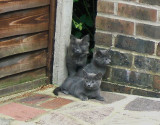 FERAL CAT FAMILY GALLERY