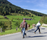 FARMERS TAKING THEIR HERD TO AN ALMABTRIEB
