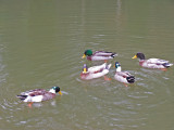 Pack Of Quackers