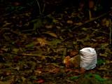 Does a Bear.....? ;)