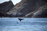 Sausalito - Farallons  2.Sep.2000