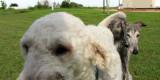 Komonizzle and the GAThound, chillin' in da 'hood, yo.