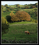 Ko-perat landskap