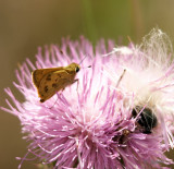 whirlabout  skipper and friend