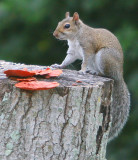 Fuzzy Tail on a log