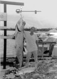 My First Tarpon : Fishing