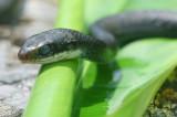 Mr. Snake gettin a suntan !