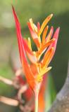Cool Yard Flower closer ...