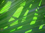 Shadows on a Palm Leaf