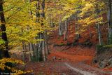 Hayedo / Beech tree forest