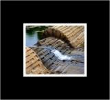 Ducks on the Dam.jpg