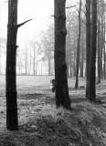 foggy twente