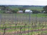 Red Hill vineyard